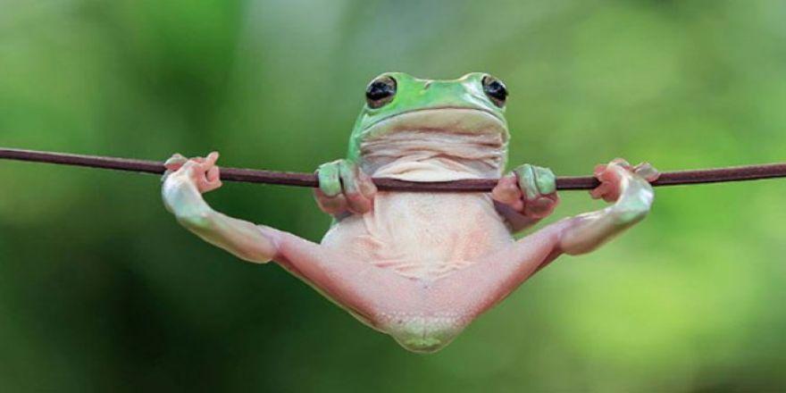 Kurbağaların tahmin edemeyeceğiniz kadar eğlenceli dünyası