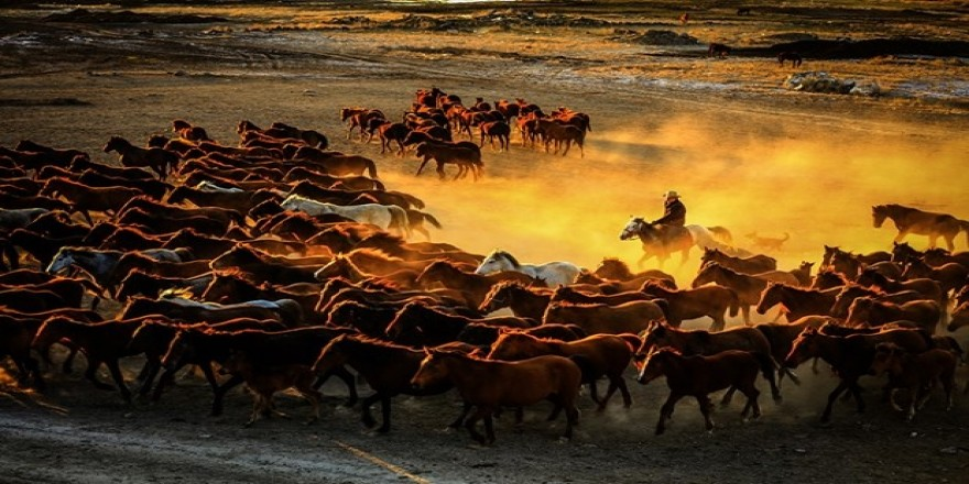 Erciyes eteklerinde yılkı atları