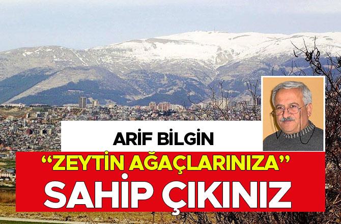 """ARİF BİLGİN """"ZEYTİN AĞAÇLARINIZA"""" SAHİP ÇIKINIZ"""
