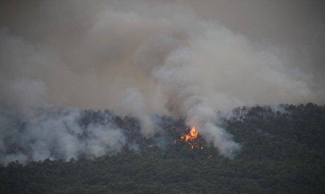 Kahramanmaraş'ta 10 hektar alan alevleri teslim oldu