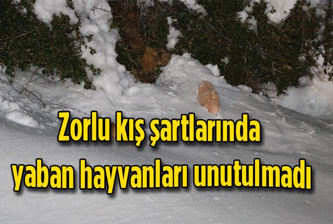 Zorlu kış şartlarında yaban hayvanlarını unutmadı