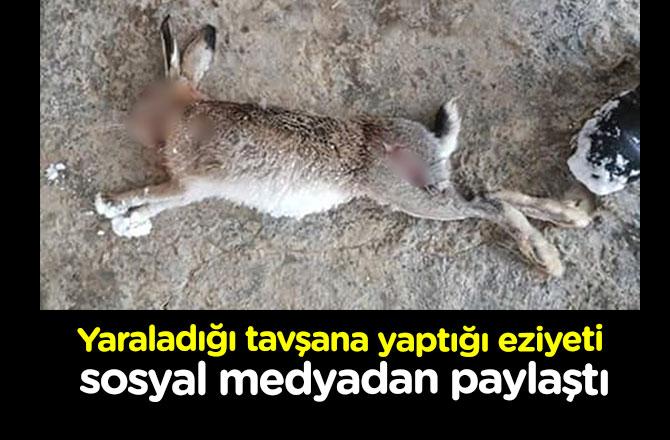 Yaraladığı tavşana yaptığı eziyeti, sosyal medyadan paylaştı