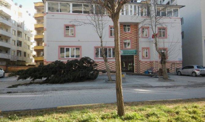 Fırtına ağaçları devirdi çatıları uçurdu