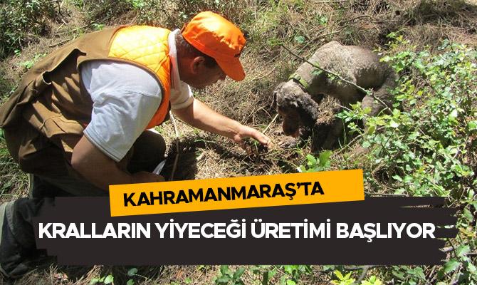 Kahramanmaraş'ta kralların yiyeceği üretimi başlıyor