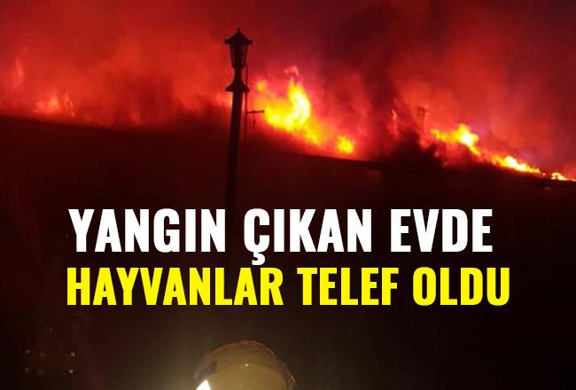 Yangın çıkan evde hayvanlar telef oldu