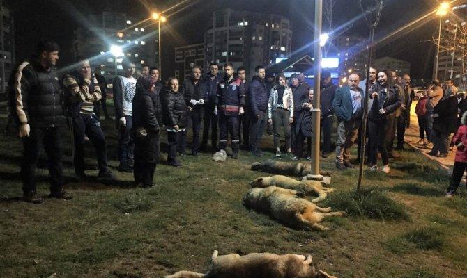 Köpek katliamı soruşturmasında sıcak gelişme
