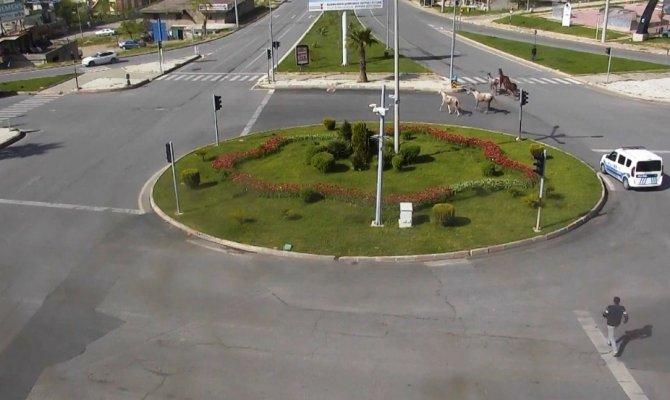 Kahramanmaraş'ta firari atlar renkli görüntülere sahne oldu