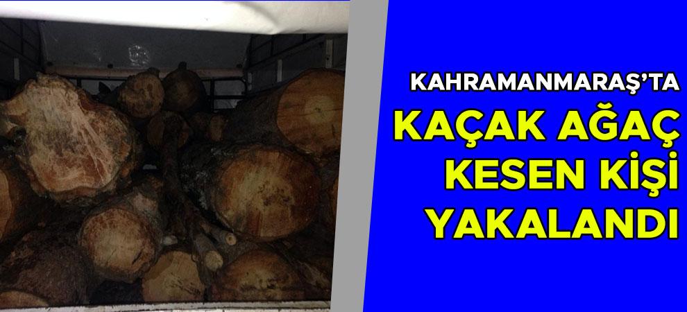 Kahramanmaraş'ta kaçak ağaç kesen kişi yakalandı