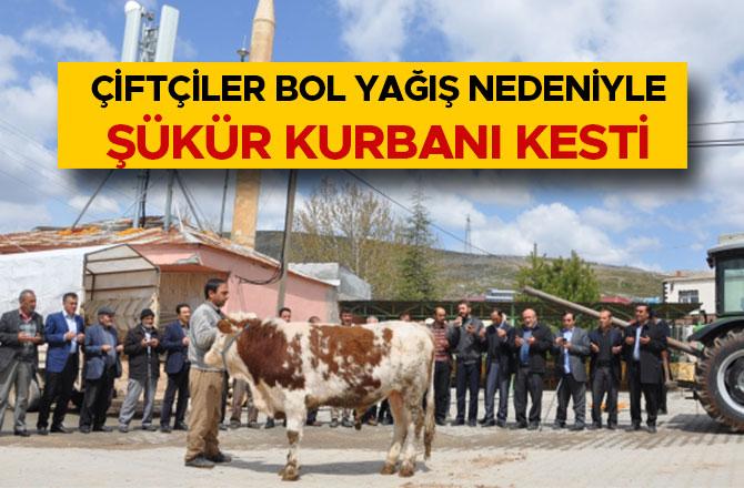 Kahramanmaraş'ta çiftçiler bol yağış nedeniyle şükür kurbanı kesti