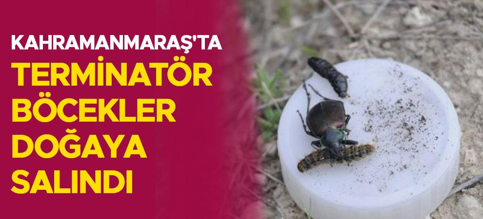 Kahramanmaraş'ta terminatör böcekler doğaya salındı