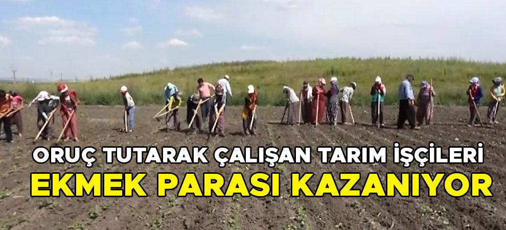 Kahramanmaraş'ta oruç tutarak çalışan tarım işçileri ekmek parası kazanıyor