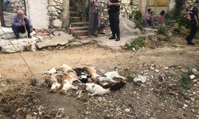 Datça'da 10 kedi zehirlenerek öldürüldü
