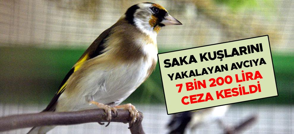 Kahramanmaraş'ta saka kuşlarını yakalayan avcıya 7 bin 200 lira ceza kesildi