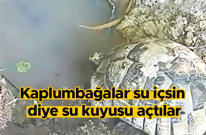 Kaplumbağalar su içsin diye su kuyusu açtılar