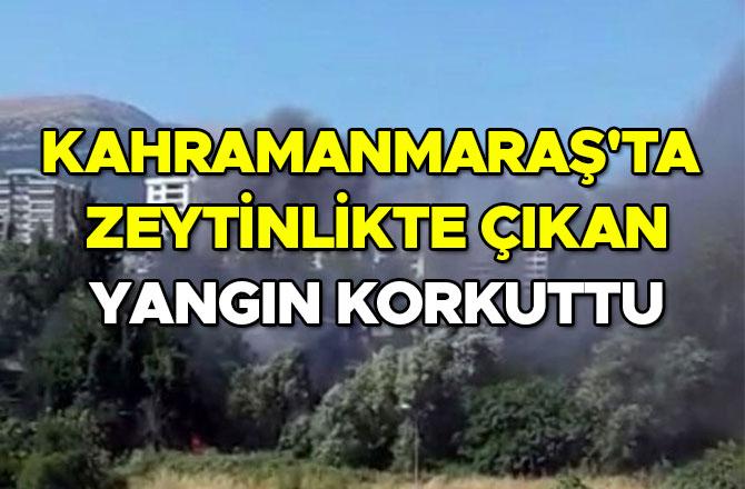 Kahramanmaraş'ta zeytinlikte çıkan yangın korkuttu