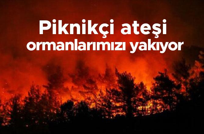 Piknikçi ateşi ormanlarımızı yakıyor