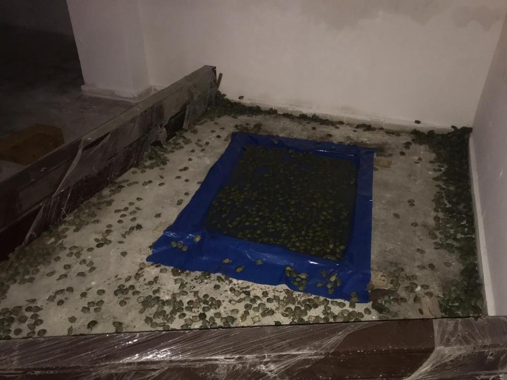 2500 kaplumbağa sınır kapısında ele geçirildi