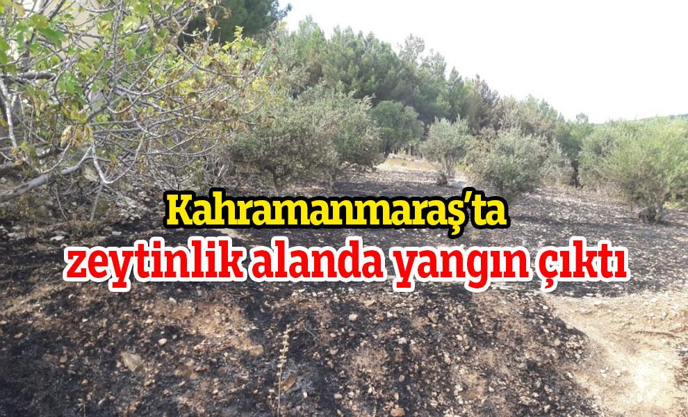 Kahramanmaraş'ta zeytinlik alanda yangın çıktı