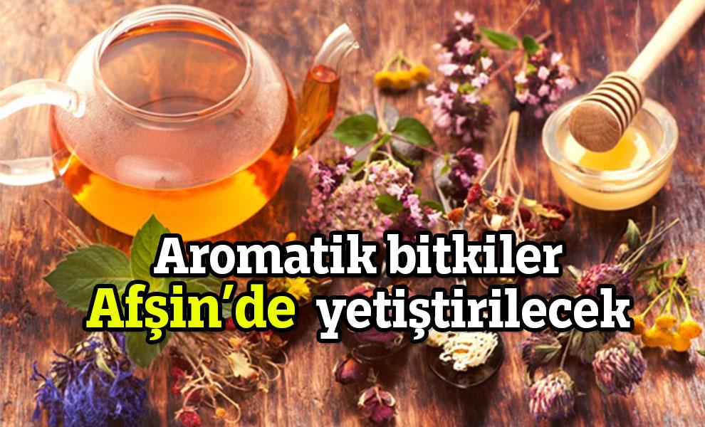 Aromatik bitkiler Afşin'deyetiştirilecek