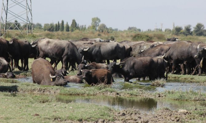 Manisa'da Afrika'yı andıran görüntüler