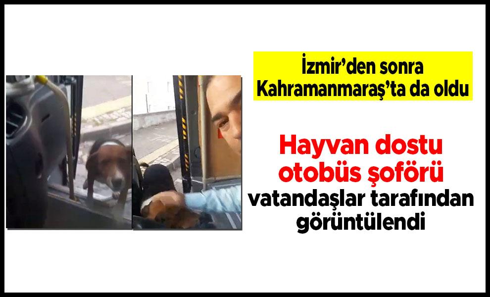 Hayvan dostu otobüs şoförü vatandaşlar tarafından görüntülendi