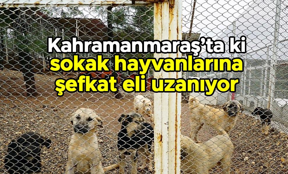 Kahramanmaraş'ta ki sokak hayvanlarına şefkat eli uzanıyor