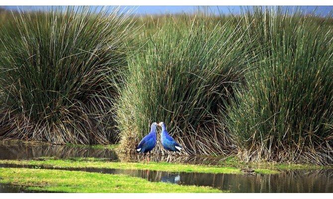 UNESCO için kuş cennetinin biyoçeşitliliği ortaya çıkarılıyor
