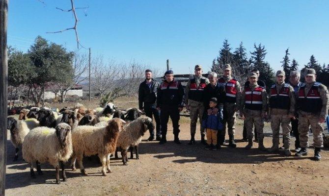 Kahramanmaraş'ta hayvan hırsızı 3 kişi serbest bırakıldı