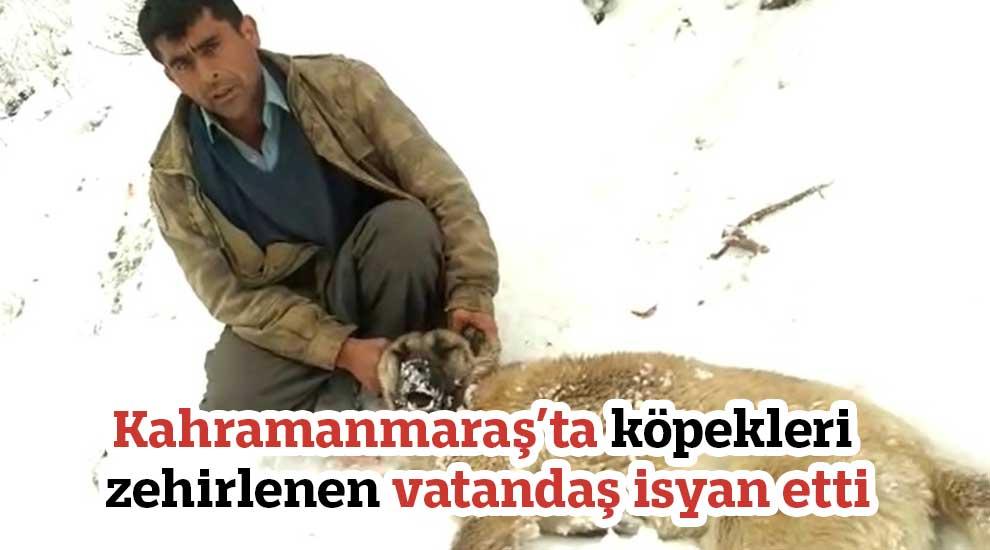 Kahramanmaraş'ta köpekleri zehirlenen vatandaş isyan etti