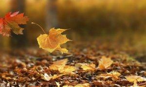 Göksun ilçesinde, sonbaharın renkleri görsel şölen oluşturdu