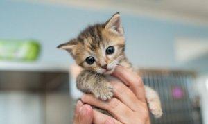 3 gündür iş yarinde mahsur kalan kedi kurtarıldı