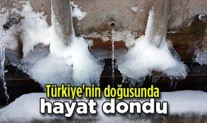 Türkiye'nin doğusunda hayat dondu
