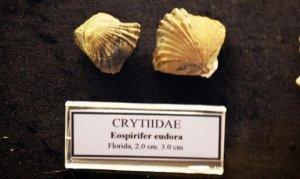 Bodrum'da 460 milyon yıllık fosil bulundu