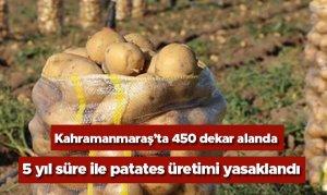 Kahramanmaraş'ta 450 dekar alanda 5 yıl süre ile patates üretimi yasaklandı