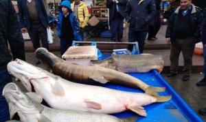 Dev balıkları görenler telefonlarına sarıldı
