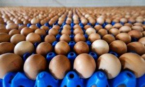 Tavuk yumurtası üretimi arttı