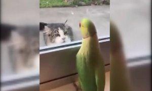 Kediyle camından arkasından böyle dalga geçti