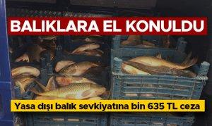 Yasa dışı balık sevkiyatına bin 635 TL ceza