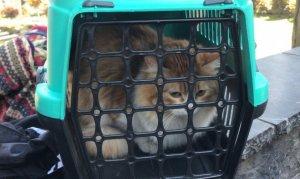 """Edirnekapı Şehitliği'nde """"evcil kedi"""" seferberliği"""