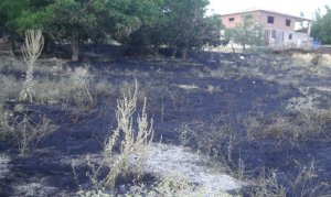 Afşin'de orman yangını büyümeden söndürüldü