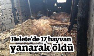 Kahramanmaraş'ta ahır yangını: 17 hayvan telef oldu