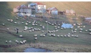 Giresun'daki Gölyanı Obası için 'tabiat parkı' talebi