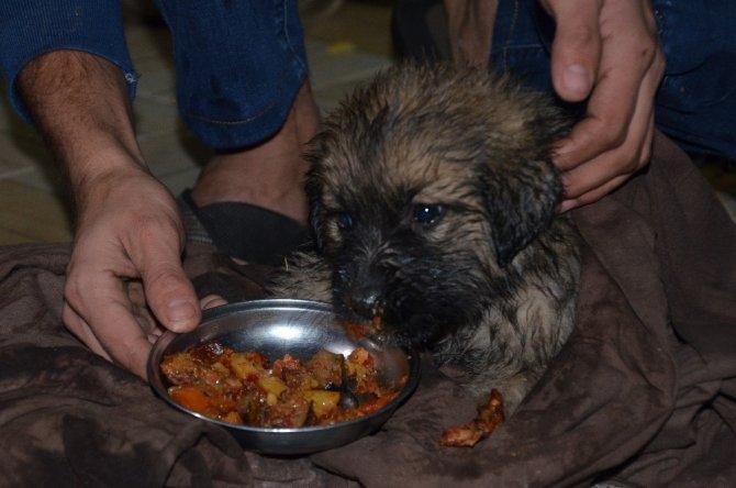 Kanalizasyon çukuruna düşen köpeğe merhamet eli değdi