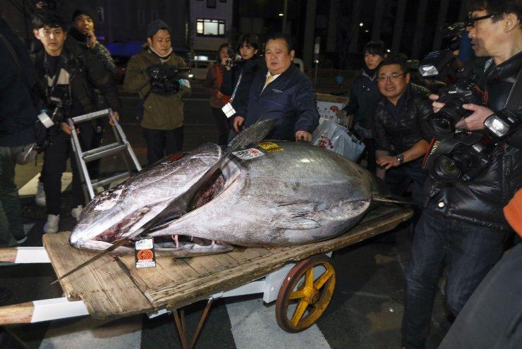 278 kiloluk mavi yüzgeçli bir orkinos 16 milyon liraya satıldı