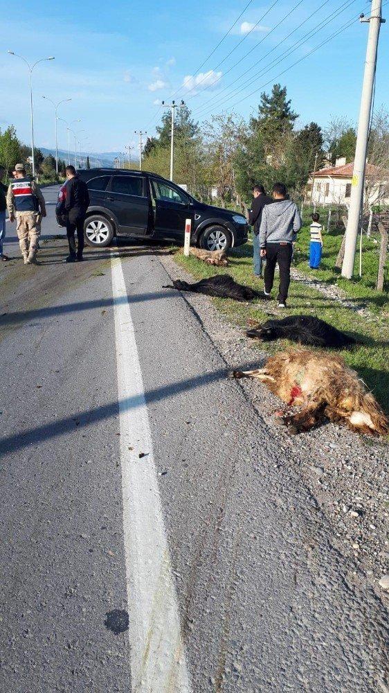 Pazarcık'ta cip koyun sürüsüne daldı, 18 hayvan telef oldu