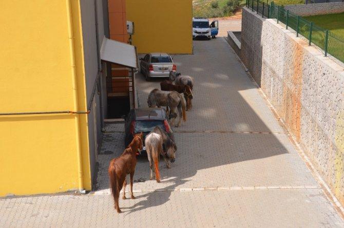 Kahramanmaraş'ta firari atlar trafiği birbirine kattı