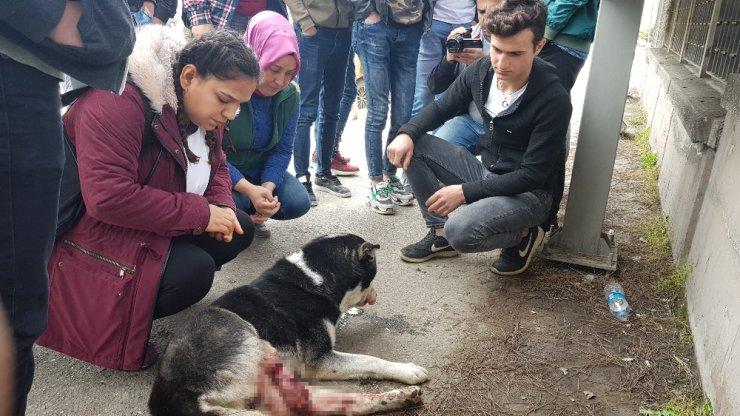 Otomobili ile çarptığı köpeğin başında dakikalarca bekledi