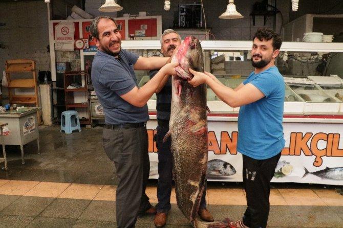 Kahramanmaraş'ta tuttular! Ağırlığı 100 kilo, boyu 2 metre