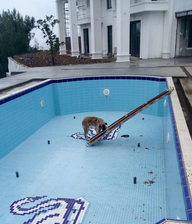 Havuza düşen köpeğin yardımına inşaat işçileri yetişti