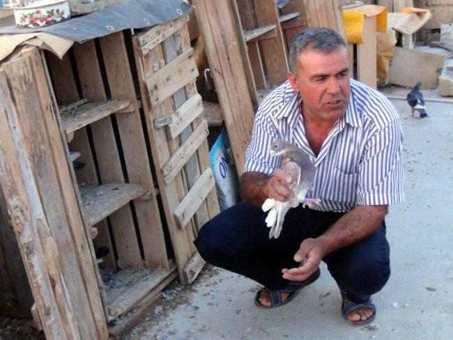 ADANA'NIN DALICI GÜVERCİNLERİ KIZILTEPE'DE UÇUYOR